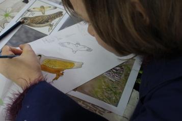 stage confection d'un livret animalier - Musartdit - atelier Jeune Public (50)