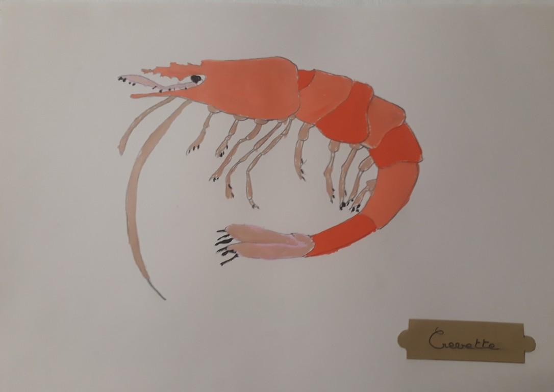 Portrait de crustacés -atelier jeune public - ouistreham - Côte de Nacre - Musartdit (9)
